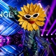 sunflower from