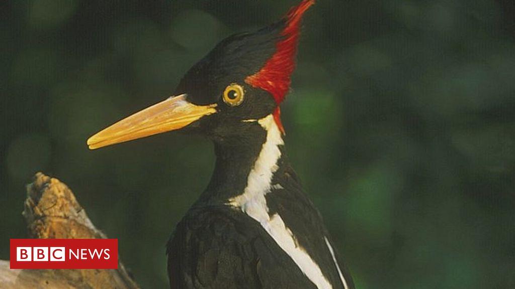 'Environmental change': The United States declares 23 species extinct