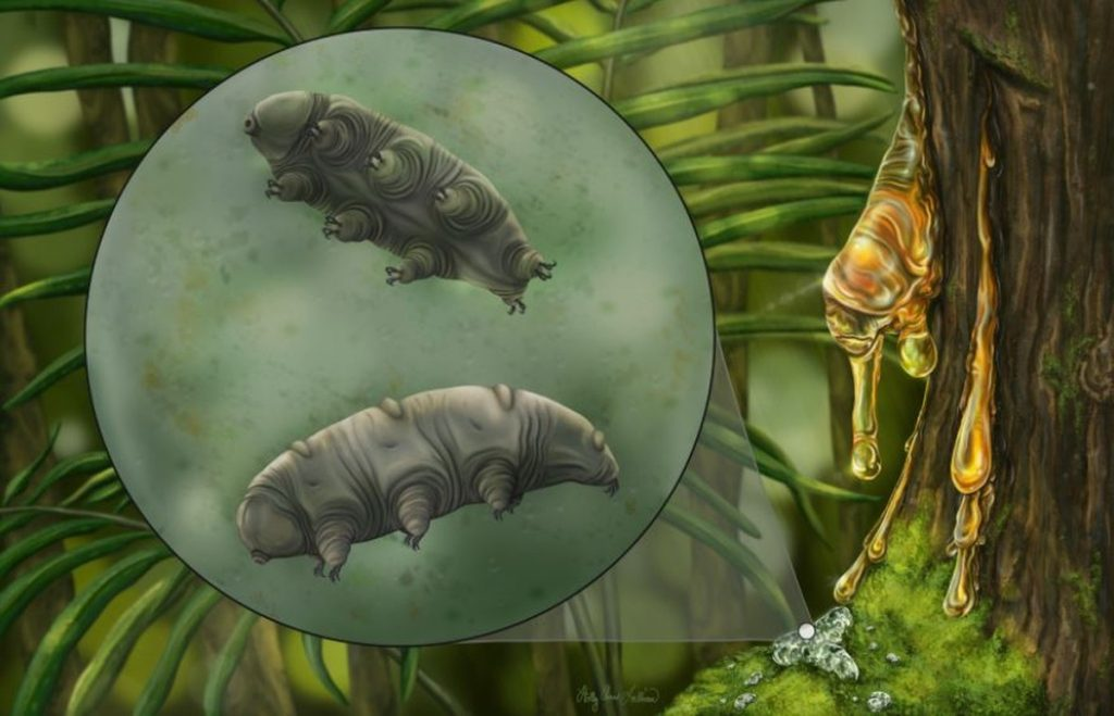 Species of Tardigrades, 'the most powerful creature on the planet', found in 16 million-year-old amber |  Science