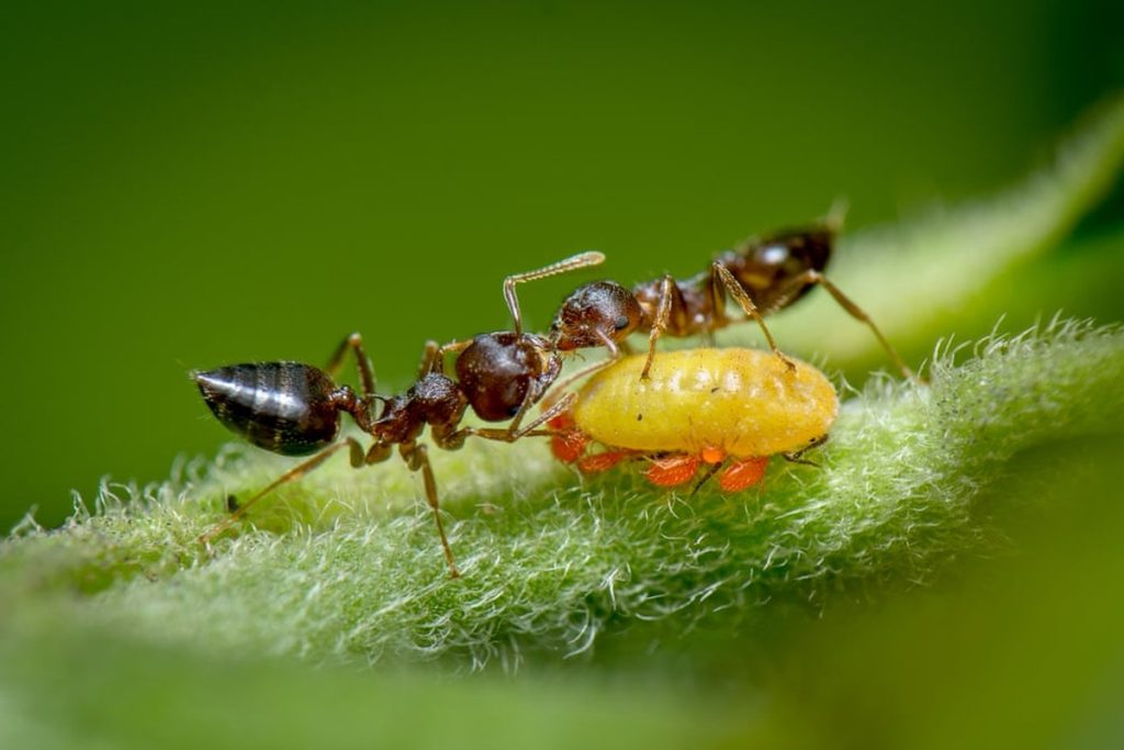 The photo of the ants that won the competition will make you think about biology lessons: do you still remember what mutualism is?     environment